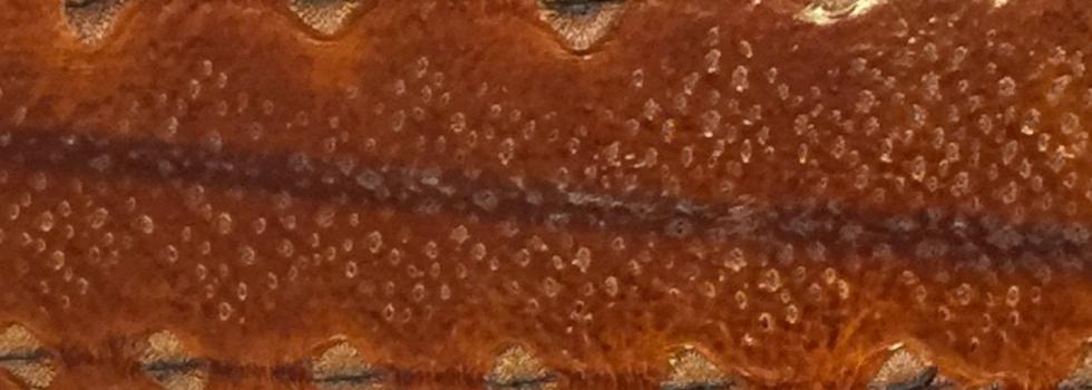 Diamantsteur leder cognac bruin