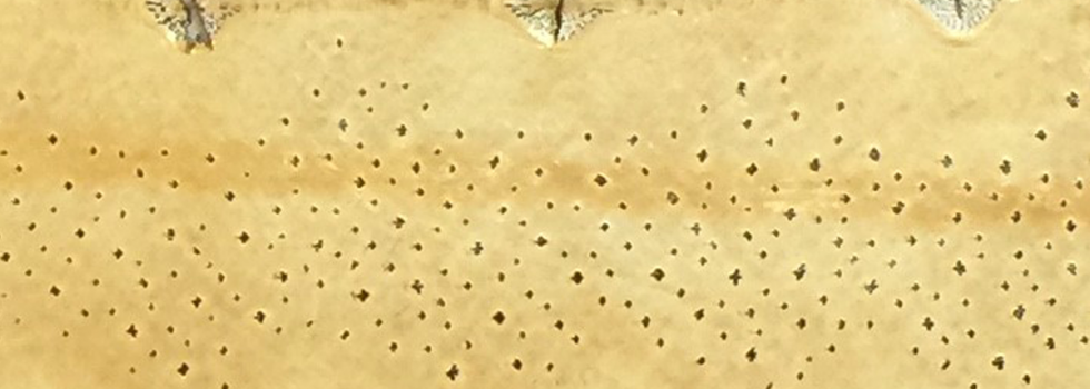 diamond sturgeon leather desert vanden collection